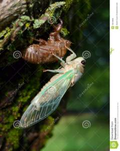 cicada-green-wings-10619605