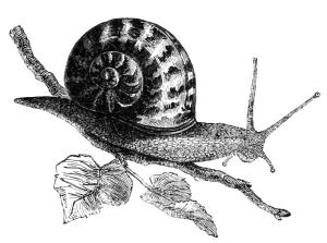 wiki snail 2