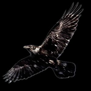 ill_Raven_1